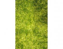 Kusový koberec Paradise zelený