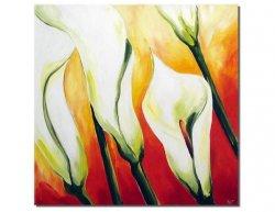 Obraz - Bílé květy kaly