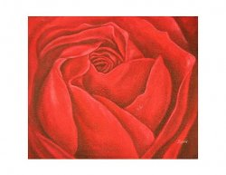 Obraz - Detail rozvité růže