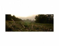 Obraz FENG-SHUI dřevo-Svítání