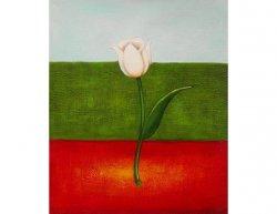 Obraz - Italský tulipán