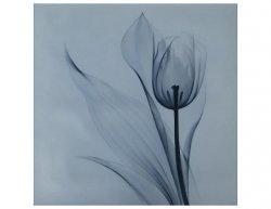 Obraz - Tulipán ve snu